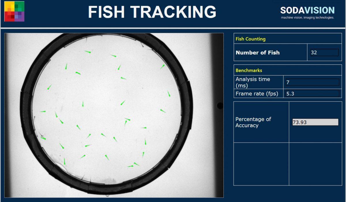 medical_lifesciences_fishtracking_sodavision_blob-analysis