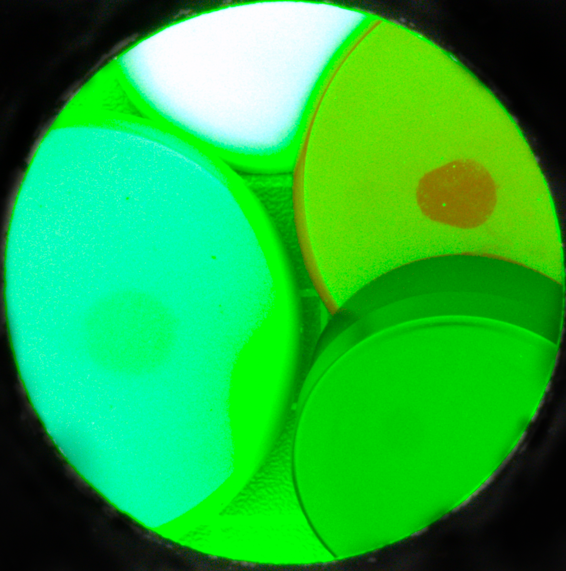 coloured-with-green-light